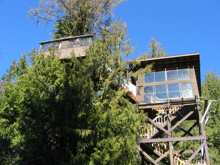 cedar-creek-tree1