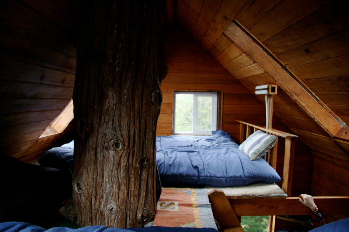 cedar-creek-tree2