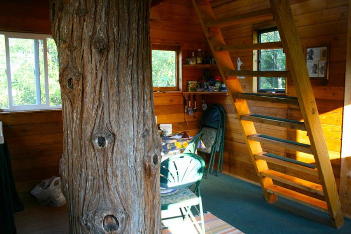 cedar-creek-tree4