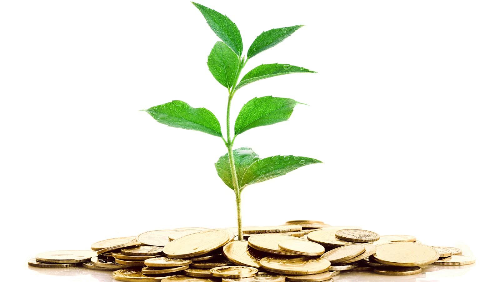 Poradnik: Jak szukać inwestora? Startup roś