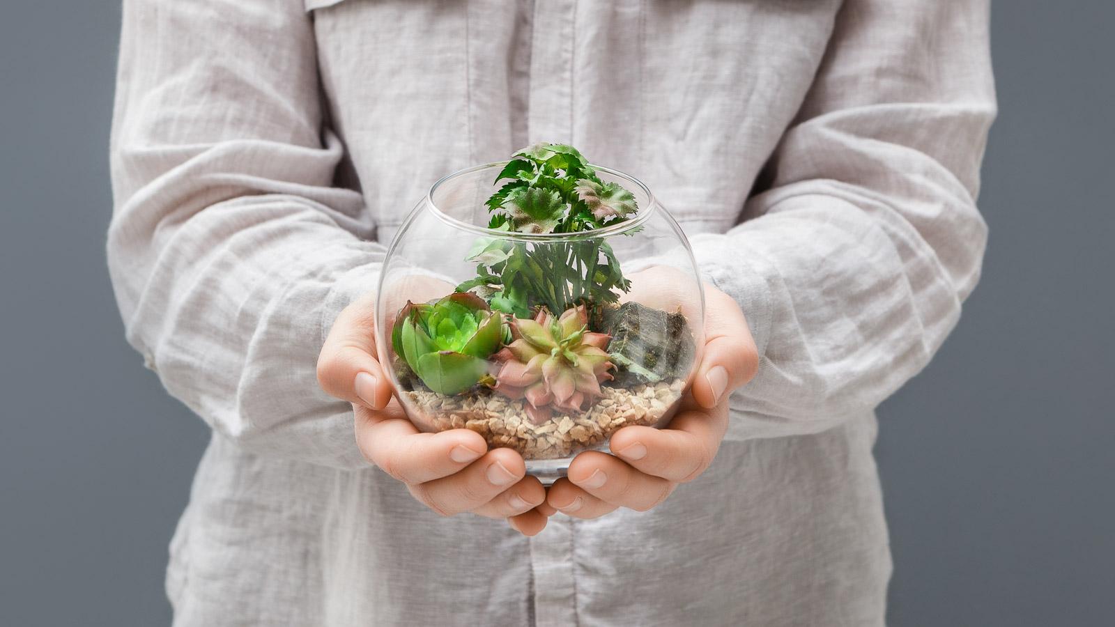 15 prostych nawyków dzięki którym POMOŻESZ środowisku eko mediarun eco roslinki 2019