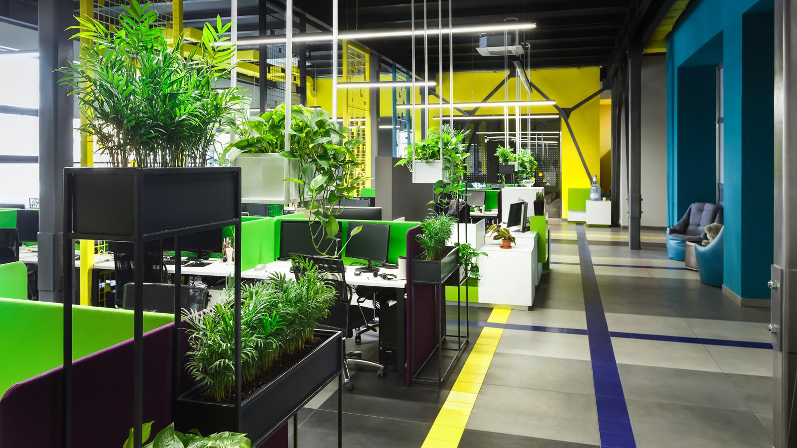 10 roślin które POPRAWIĄ ATMOSFERĘ w biurze Biuro mediarun biuro rosliny 2020