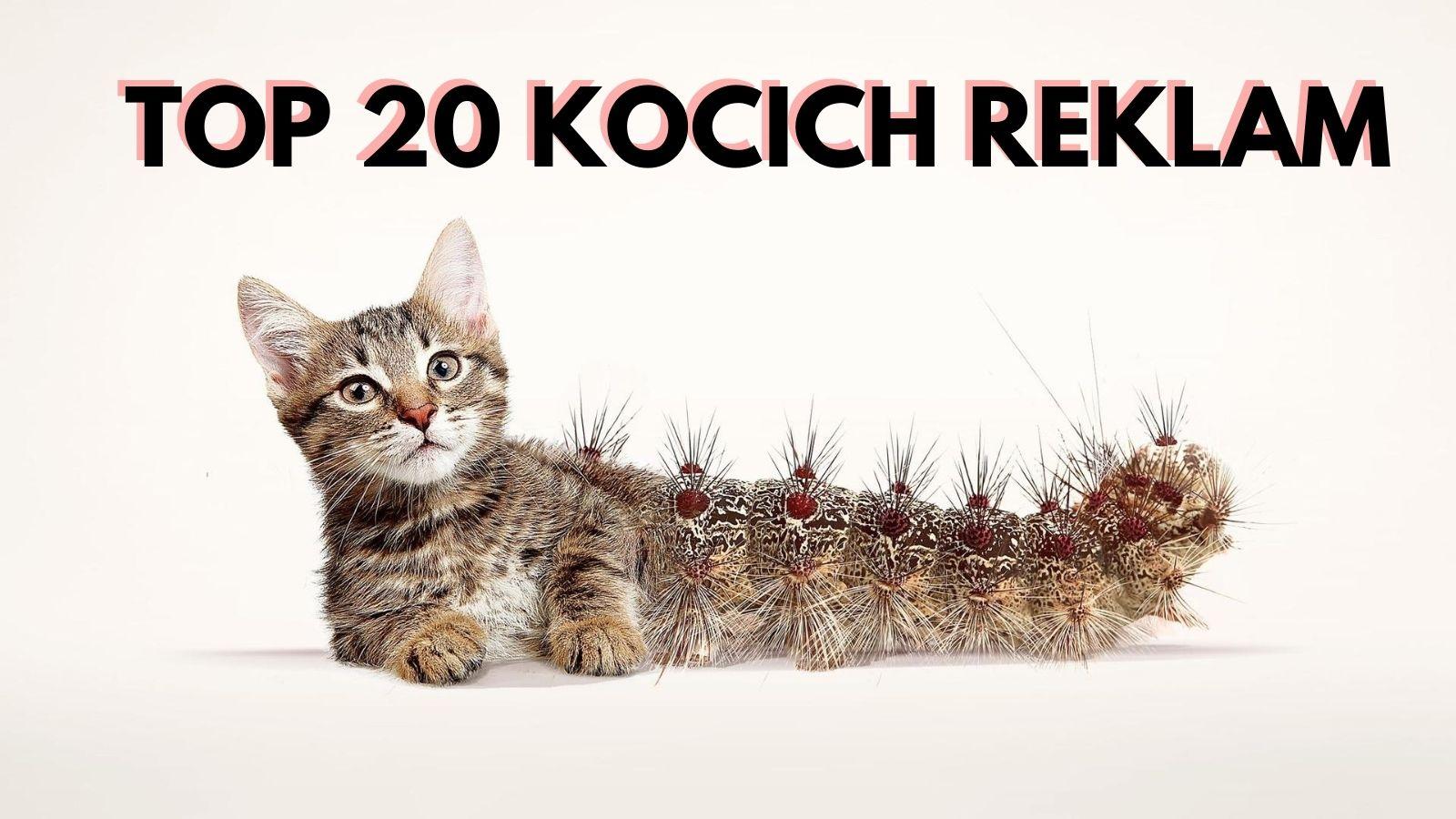 Koty w reklamie - przegląd międzynarodowych kampanii [GALERIA] koty mediarun cat profile