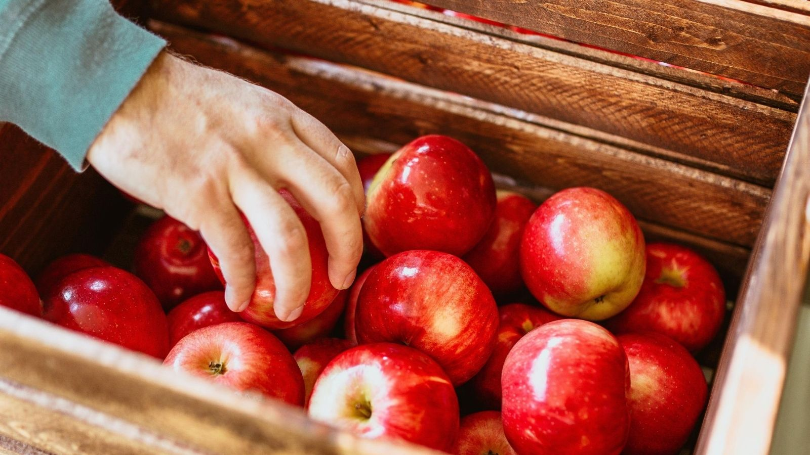 Jabłko nowym symbolem Polski? Promocja mediarun jablka