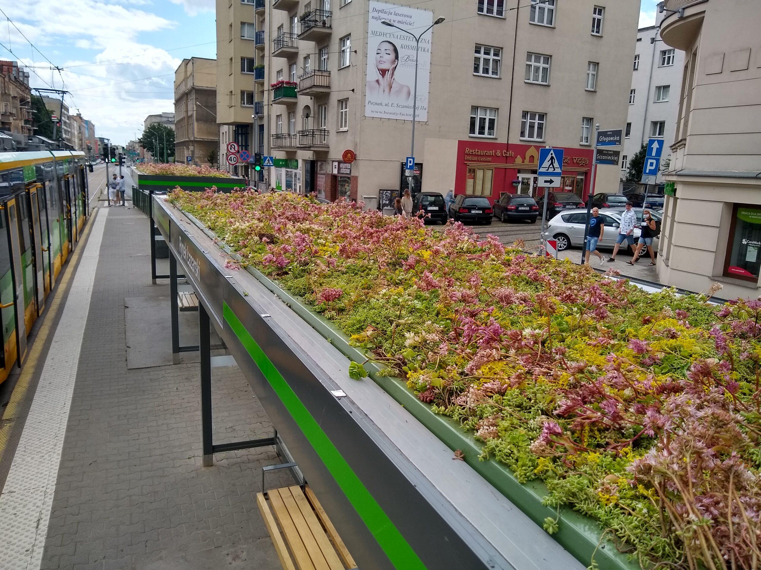 Poznań z innowacyjnym sposobem na zwiększenie liczby zielonych miejsc Design Rynek Łazarski 1 scaled
