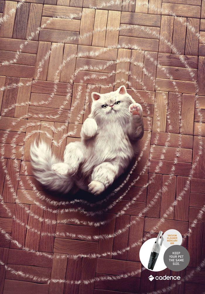 Koty w reklamie - przegląd międzynarodowych kampanii [GALERIA] cats mediarun cat cadence