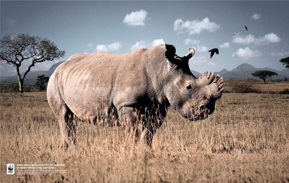 W trosce o planetę! Zobacz najlepsze kreacje WWF [GALERIA] ekologia mediarun wwf rhino